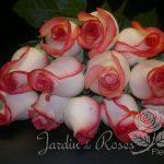 Douzaine de roses