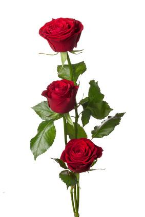 3 roses rouges ou autres couleurs.