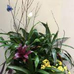 Arrangement de plantes 02